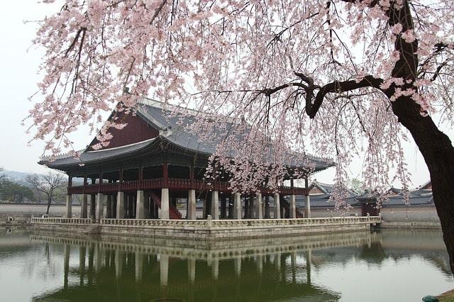 Stage en Corée du Sud