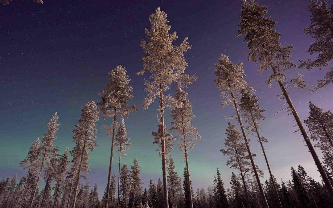 Témoignage stage en Laponie
