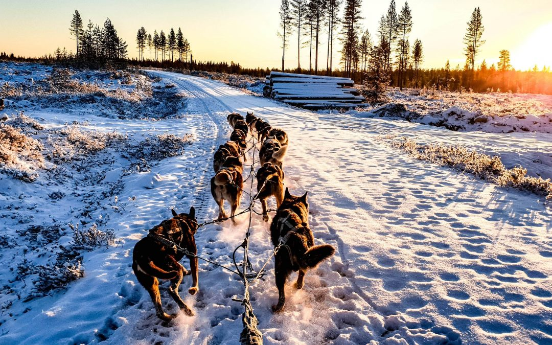 TOP 10 anecdotes about Finland